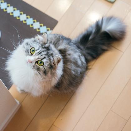 2月22日は猫の日! もっとも多い猫の名前&マイニャンバーって!?