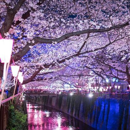 今年の桜はいつ開花する? お花見最新事情~やってはいけないNG&必携アイテム