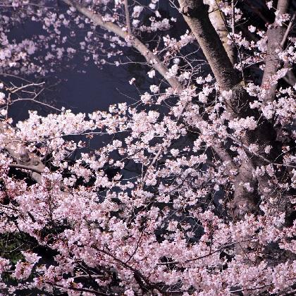 終電ギリギリまで、ふたりでいたいから...。東京駅で夜桜デートのススメ!