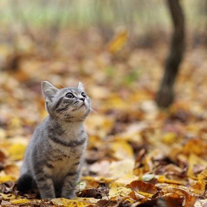 敬老の日の贈り物や、猫好きさんへのプレゼントに♪ 『秋の猫日和和三盆』を発売! ~フェリシモ猫部