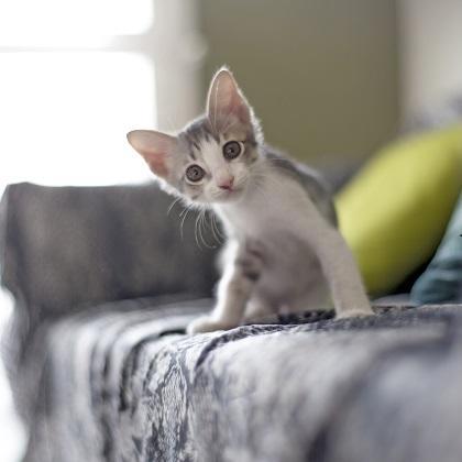 2月22日は猫の日(=^・ω・^=) ジャンル別猫グッズランキングTOP3アイテムをご紹介♪ ~楽天市場調べ