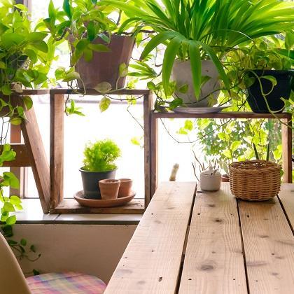 自宅やオフィスに小さな癒し♪ 人気の観葉植物ランキング2018 ~ アイリスガーデニングドットコム調べ