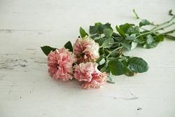 yama20190508_2_8_botanic2.jpg